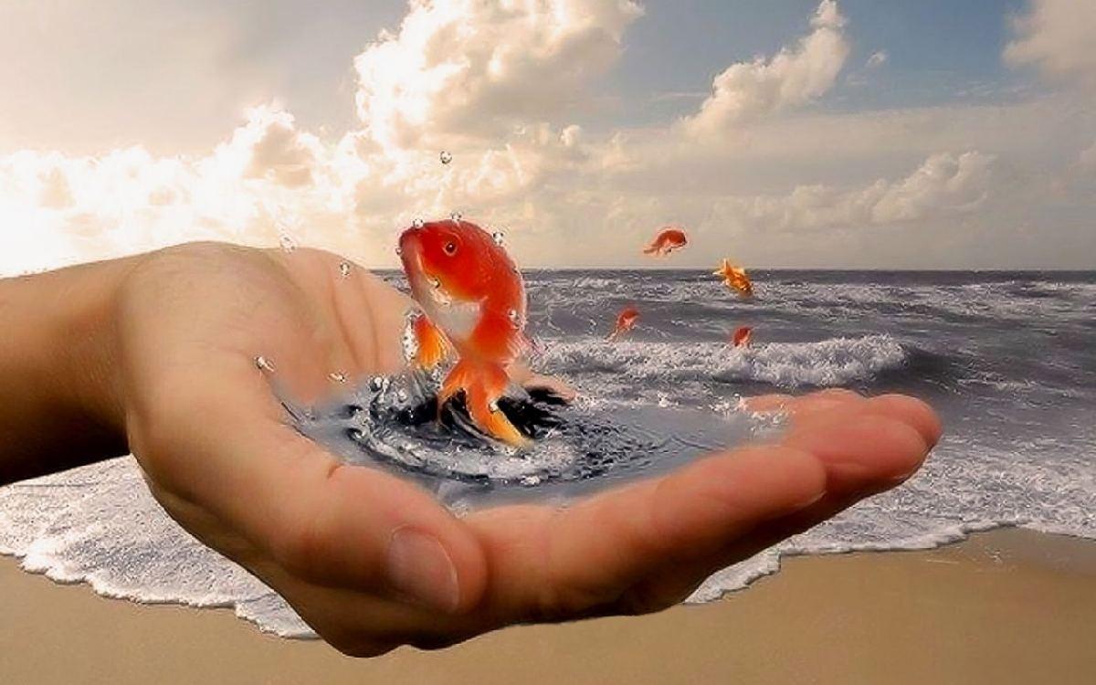 Спасите рыбок!