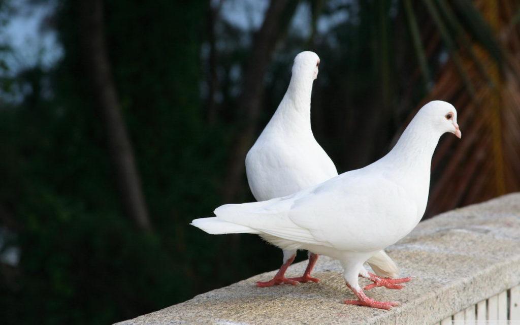 Искровская птица